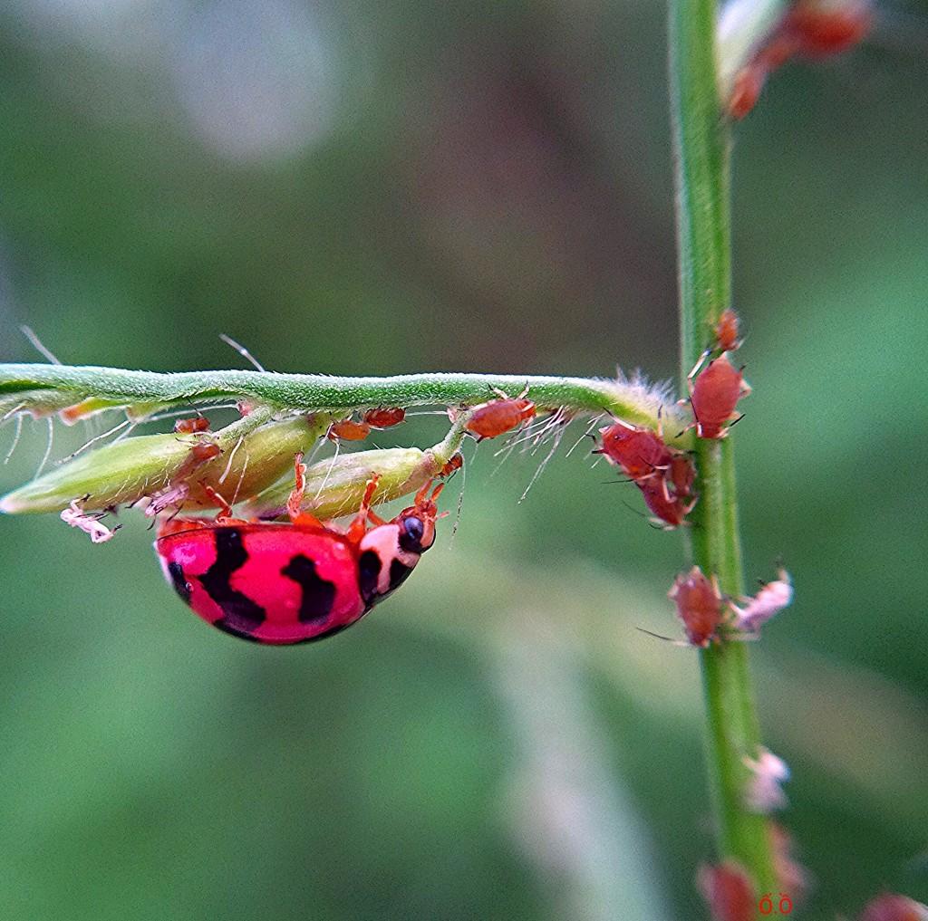 ảnh chụp từ BlackBerry Q10 + macro lens!