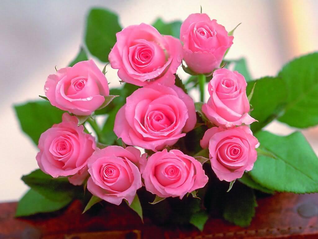 Chọn hoa hồng thể hiện thông điệp tình yêu