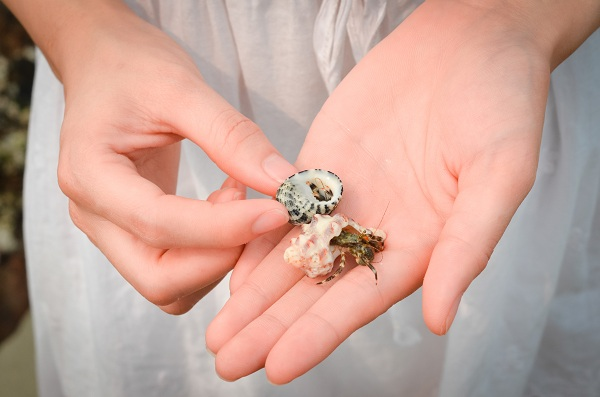 Trên bãi biển có rất nhiều vỏ ốc đẹp cho bạn tha hồ nhặt…!
