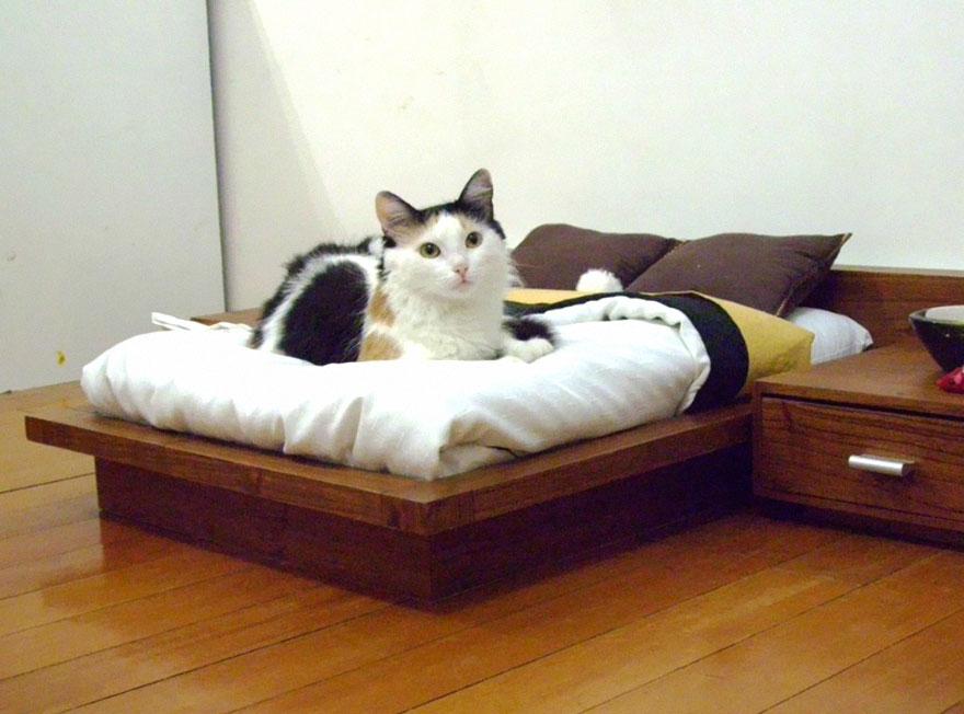 Máy Hút Lông Chó Mèo